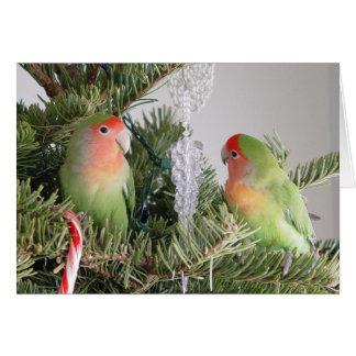 Lovebird Christmas Card