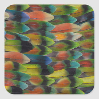 Lovebird Tail Feather Pattern Square Sticker