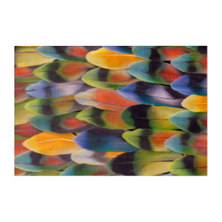 Lovebird Tail Feathers Abstract Acrylic Print