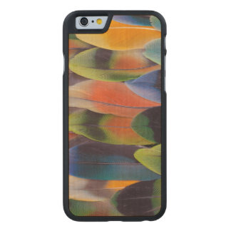 Lovebird Tail Feathers Abstract Carved Maple iPhone 6 Case
