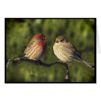 Lovebirds Card