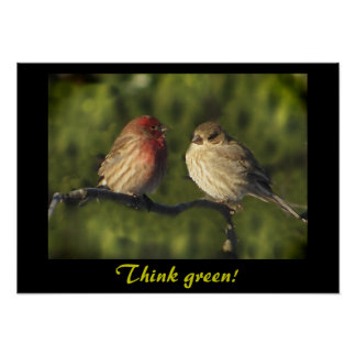Lovebirds Think Green Poster