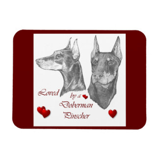 Loved By A Doberman Pinscher Rectangular Photo Magnet