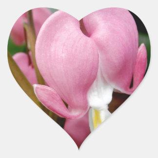 Lovely Bleeding Heart Blossom Heart Sticker