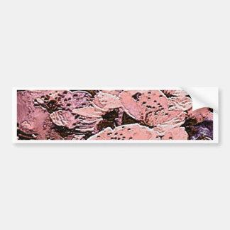 lovely blossoms salmon bumper sticker