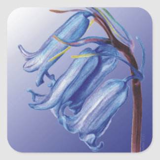 Lovely Bluebell Drawing Square Sticker
