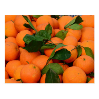 Lovely Bunch of Oranges Postcard