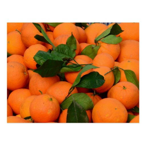 Lovely Bunch of Oranges Postcards