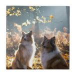 Lovely Collie Dog Tiles