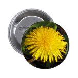 Lovely Dandelion Pinback Buttons