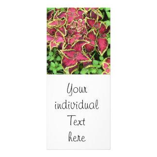lovely Garden pics 05 Custom Rack Cards