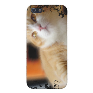 Lovely Ginger Cat Case For The iPhone 5