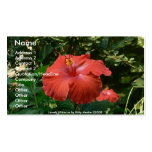Lovely Hibiscus Business Card