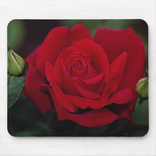 Lovely Hybrid Tea Rose 'Chrysler Imperial' Mouse Mat