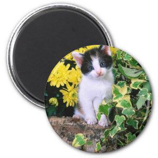 Lovely Kitten 32 Fridge Magnets