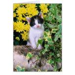 Lovely Kitten 32 Greeting Card