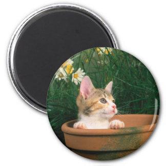 Lovely Kitten 54 Fridge Magnets