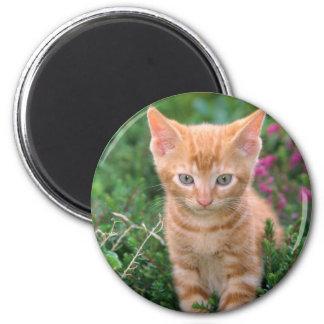 Lovely Kitten 7 6 Cm Round Magnet