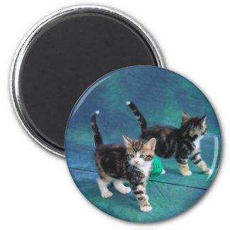 Lovely Kitten in a Mirror 61 6 Cm Round Magnet