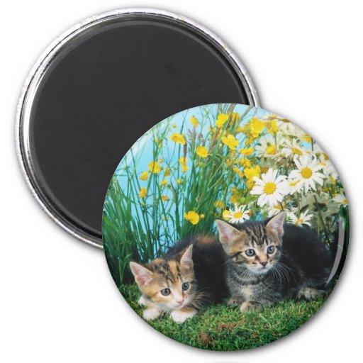 Lovely Kittens 63 Magnets