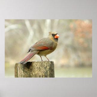 Lovely Lady Cardinal Rectangular Poster