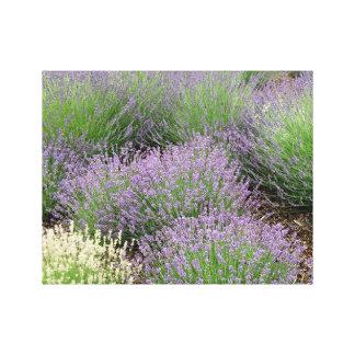 Lovely Lavender Canvas Print