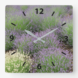 Lovely Lavender Square Wall Clock