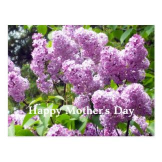 Lovely Lilac Bush Postcard