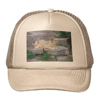 Lovely Lioness Trucker Hats