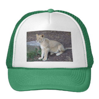 Lovely Lioness Hat