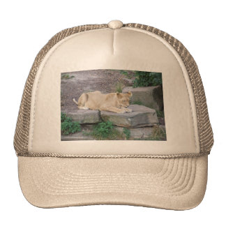 Lovely Lioness Trucker Hats