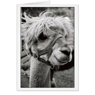 Lovely Llama Greeting Card