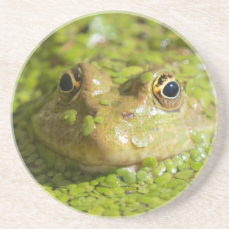 Lovely looking frog coaster
