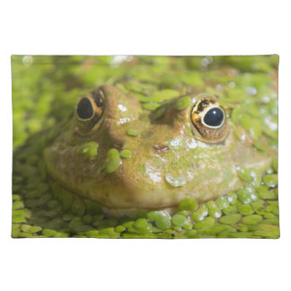 Lovely looking frog placemat