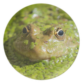 Lovely looking frog plate