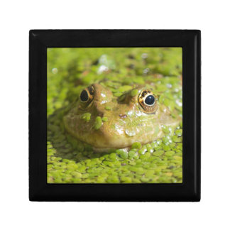 Lovely looking frog small square gift box