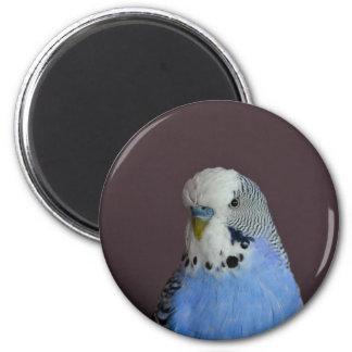 Lovely Macro Budgie Bird 6 Cm Round Magnet