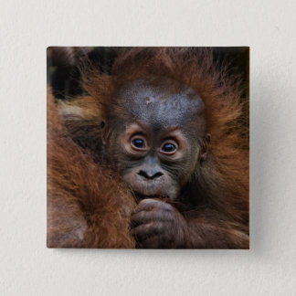 lovely orang baby 15 cm square badge