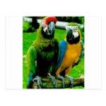 Lovely Parrot enlarge.jpg Post Cards