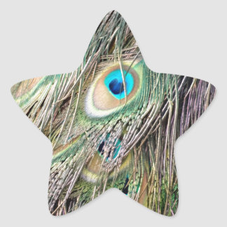 Lovely Peacock Feather Eyes With New Growth Star Sticker