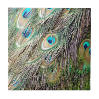 Lovely Peacock Feather Eyes With New Growth Tile