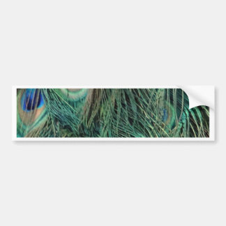 Lovely Peacock Feathers Bumper Sticker