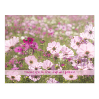 Lovely Pink Fuchsia Cosmos Flower Field Sunlight Postcard