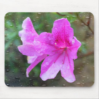 Lovely pink garden flowers with rain drops. floral mouse pads