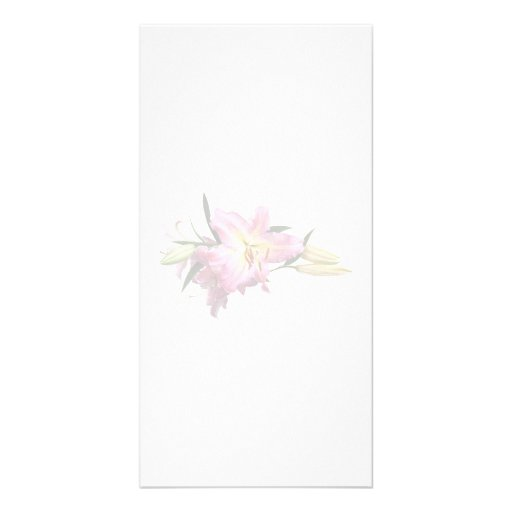 Lovely Pink Lilies Photo Cards