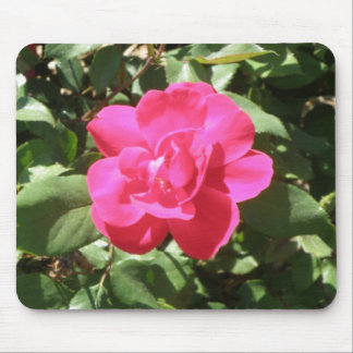 Lovely Pink Rose Mousepad