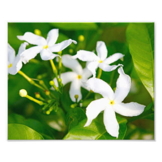 Lovely Pinwheel Jasmine Photo Print