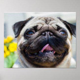 Lovely Pug Poster