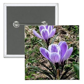 Lovely Purple Crocus Flowers with dark green leave Button