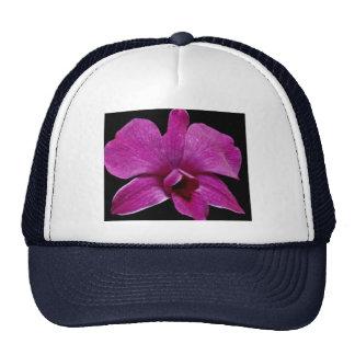 Lovely Purple dendrobium Hats